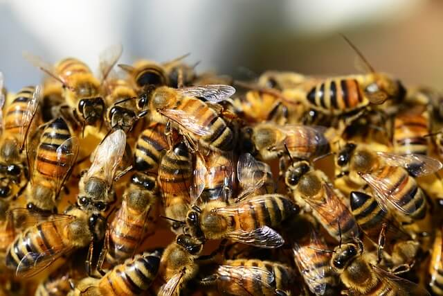 Bee Nest Removal Mansfield